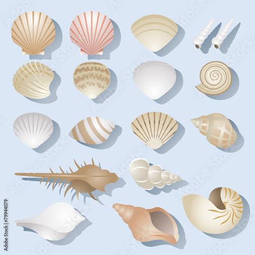 Sea Shell Objects Set - 79944079