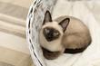 Siamese cat lying in a basket
