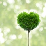 Fototapety Schöner Baum in Herzform