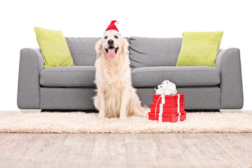 Studio shot of a dog with Santa hat sitting by a sofa