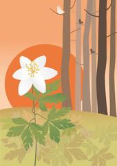 Anemone at the sundown