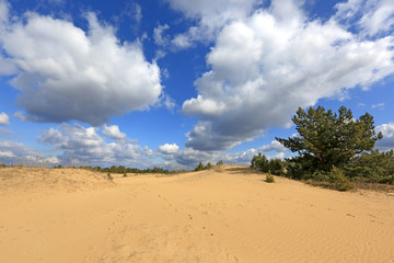 landscape on sands with small pine