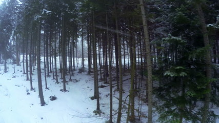 Forest and Snowfall