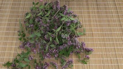 fresh healthy oregano wild marjoram medical flowers