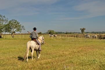 Camargue, cavalli 6