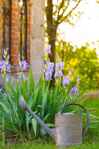 Foto op Canvas Iris iris