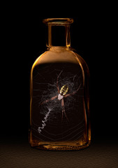 Spider in a Bottle