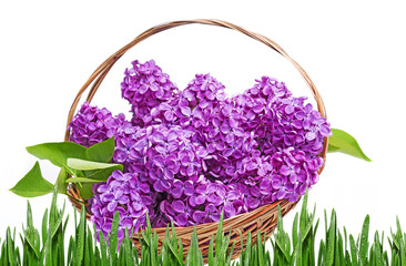 lilac in a basket