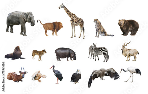 Tuinposter Zebra A collage of wild animals