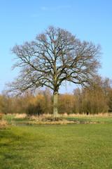 arbre dans un près