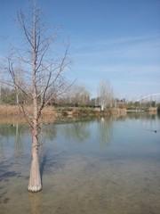 Lago en Parque Cabecera, Valencia