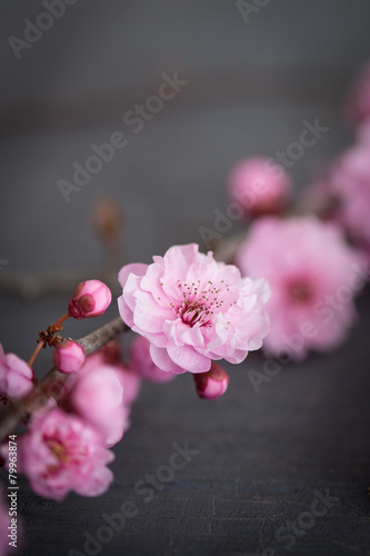 Juliste fleurs zen