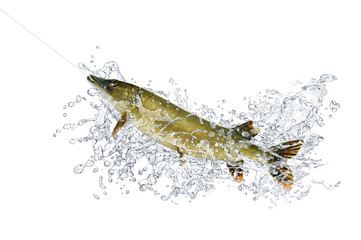 Fische 92
