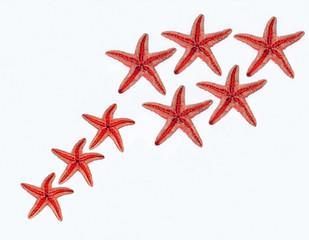 stelle marine rosse su sfondo bianco