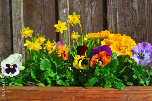Frühling Blumen pflanzen