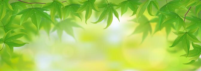 Fresh green maple leaves background, vector illustration