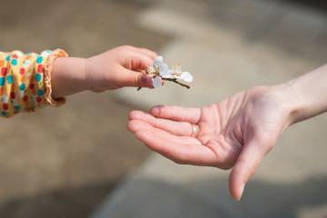 梅の花を手渡す親子の手