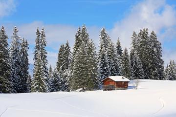 Tannenwald mit Holzhaus