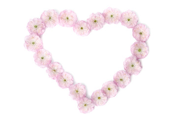 pink flowers in  shape of heart on white background