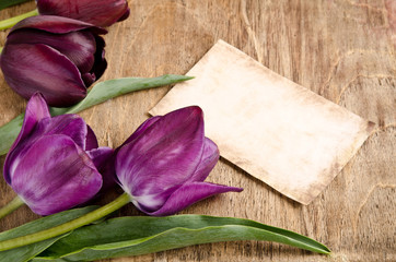 area of fresh tulips and card on wooden background