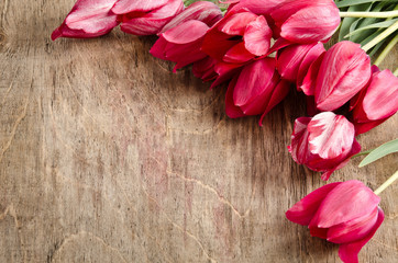 corner for photo from fresh tulips