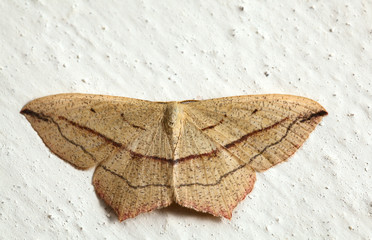 Moth on the wall