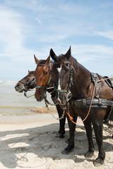 Horses with tilt car at the coast