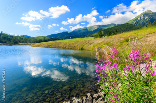 Flowers and beautiful mountain lake in High Tatras, Slovakia - 79979256