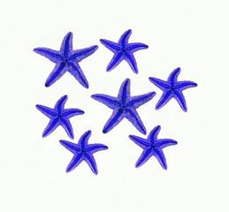 stelle marine blu su sfondo bianco