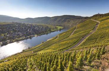 Deutschland, Rheinland-Pfalz, Ansicht der Weinberge in Pünderich