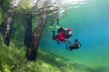 Österreich, Steiermark, Tragoess, See Grüner See, Taucherschwimmen über überfluteten Wiese und neben Baumstämmen