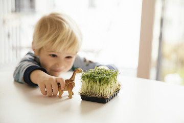 Kleiner Junge spielt mit Spielzeug Dinosaurier und Schachtel mit Kresse auf einem Tisch