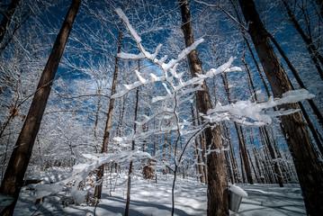 A walk through the winter woods.
