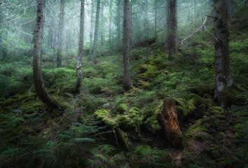 Mysterious spring forest in fog. Morning in Ukraine