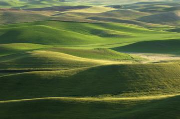 USA, Bundesstaat Washington, Luftaufnahme Felder und grüne Hügel von Palouse