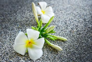 Plumeria flowers several, white flowers