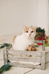Cat sitting in box on white wooden floor
