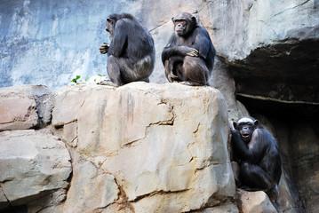 Ape family in LA Zoo, Los Angeles, California