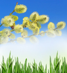 spring branch and green grass