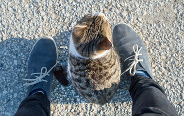 Cat sitting between my shoes