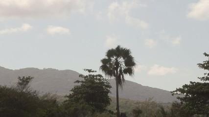 Jamaican mountain countryside tropical landscape