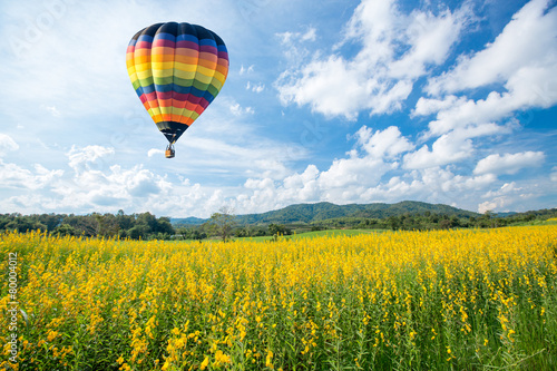 Hot air balloon over yellow flower fields against blue sky - 80004012