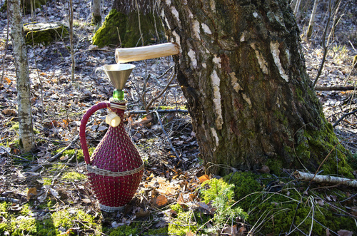 wicker wine bottle and birch tree with spigot and sap drops - 80006466