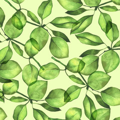 Pear foliage