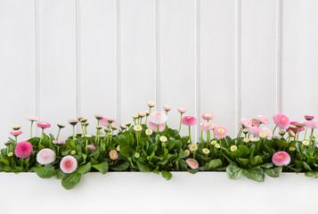 Country Style Hintergrund Holz in weiß mit rosa Blumen