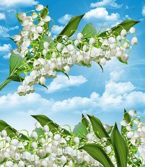 The branch of white flowers lily of the valley on a background o