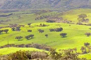 pâturages de la Plaine des Cafres, île de la Réunion