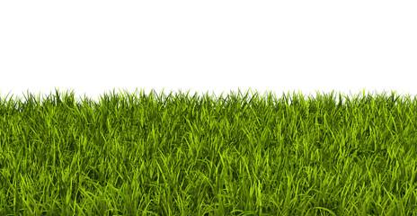 Gras, Rasen, Wiese, Ostergras, Sommer, Hintergrund, Vorlage