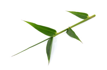 Green bamboo leaves on a white background