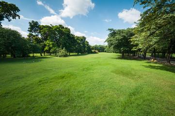 Green summer park garden.